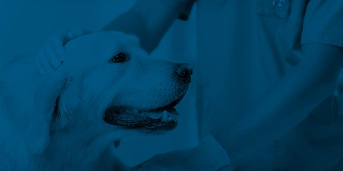 Multiresistente bakterielle Hautinfektion bei einem Hund mit mehreren Komorbiditäten – Abklärung und Behandlung